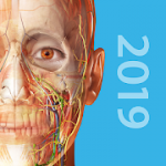 Human Anatomy Atlas 2019 Complete 3D Human Body 2019.1.38 APK