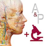 Anatomy & Physiology v 6.2.00 APK